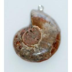 Ammonite en pendentif