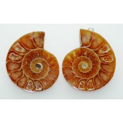 Ammonites en pendentif