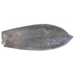 Duvalia grassiana (Duval-Jouve)