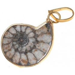 Ammonite montée en pendentif